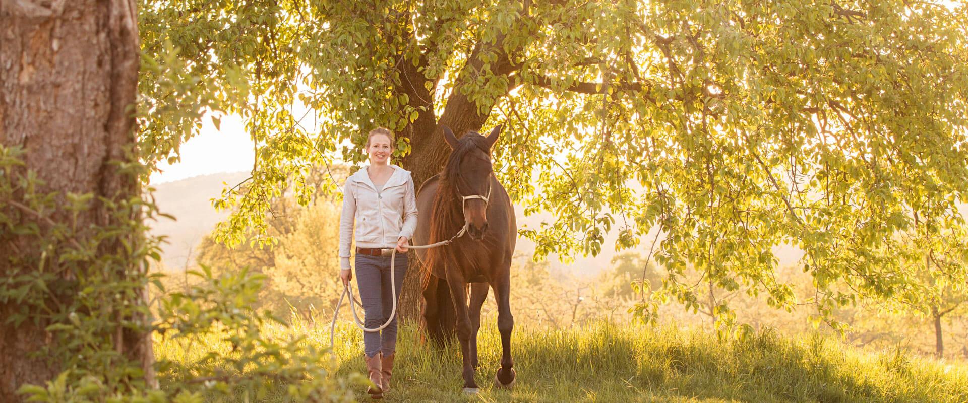 Homöopathische Therapie für Pferde in Tübingen, Reutlingen und Stuttgart mit Sarah Henne