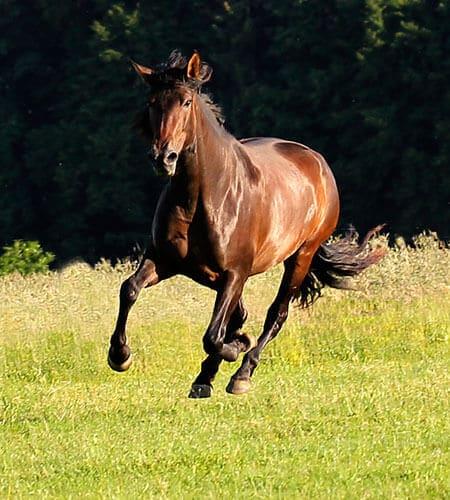 Pferdeakupunktur in Stuttgart mit Sarah Henne - Tierheilpraktikerin für Pferde