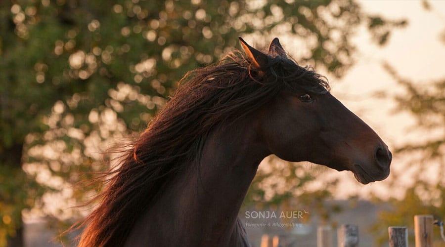 Homöopathische Therapie & Miasmatik für Pferde in Stuttgart mit Tierheilpraktikerin Sarah Henne